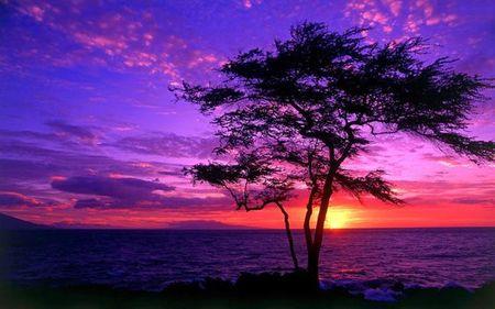 Purple sunset inspiration